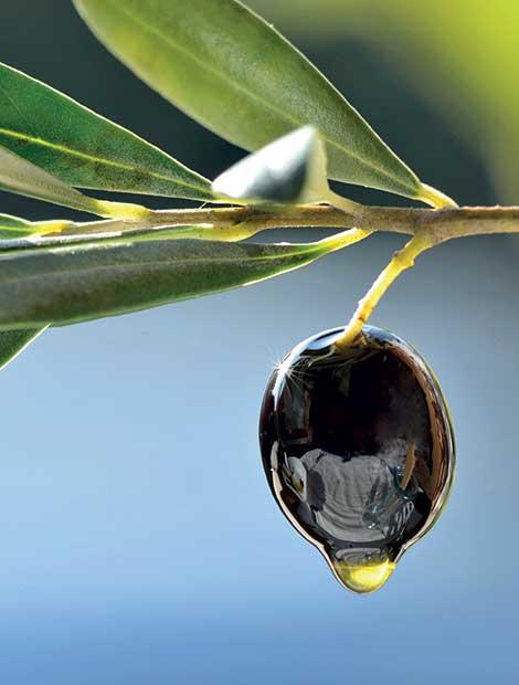 Frantoio Puglia - Produzione olio di oliva